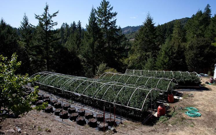 farm-green004