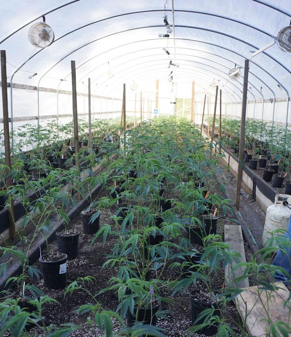 farm-mattoleriverfarms