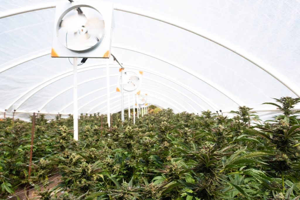 Humboldt-Nation-Cannabis-Farm-Photo_34