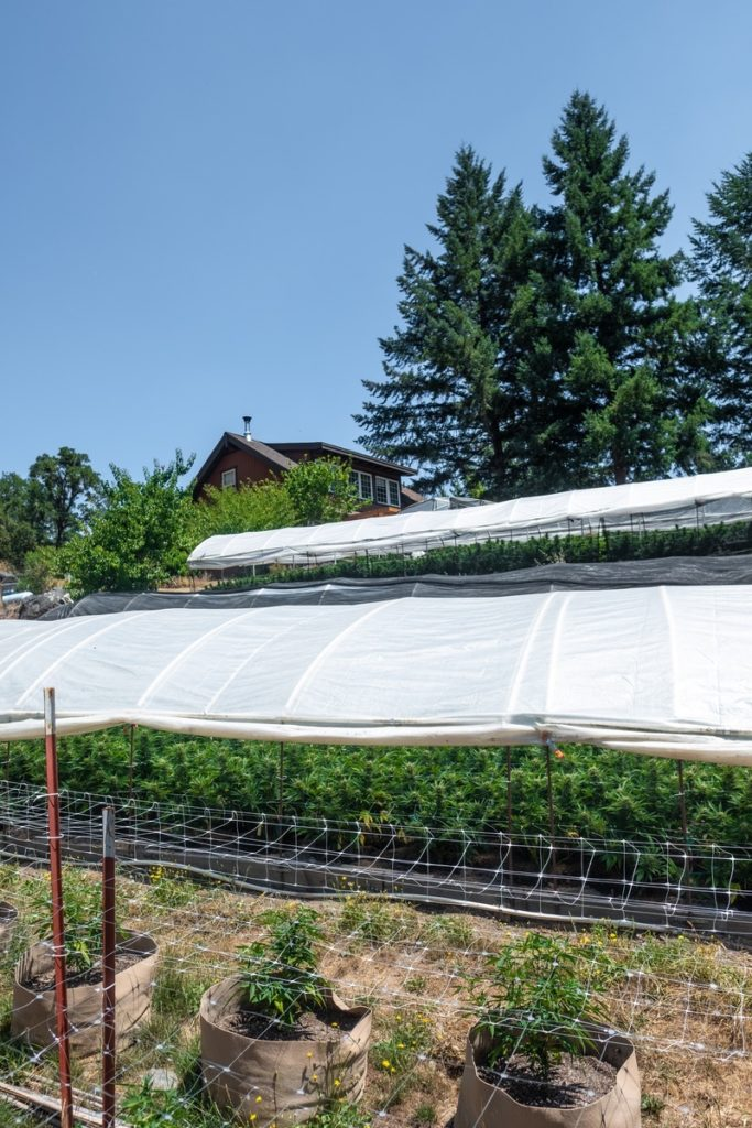 Humboldt-Nation-Cannabis-Farm-Photo_58