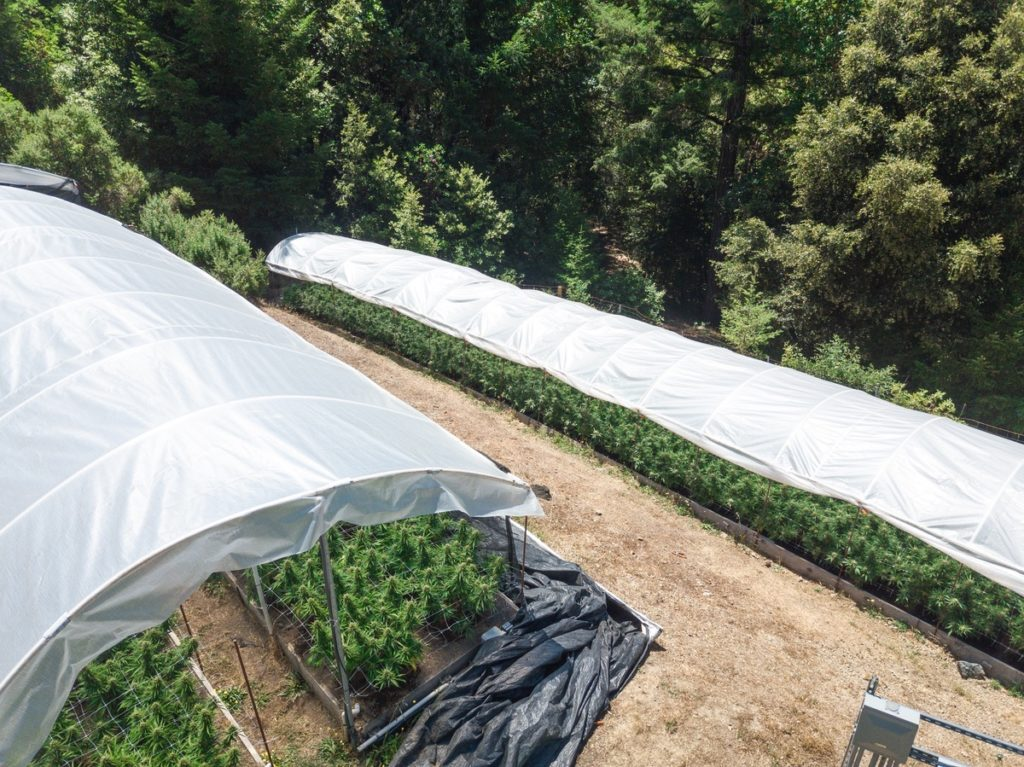 Humboldt-Nation-Cannabis-Farm-Photo_80