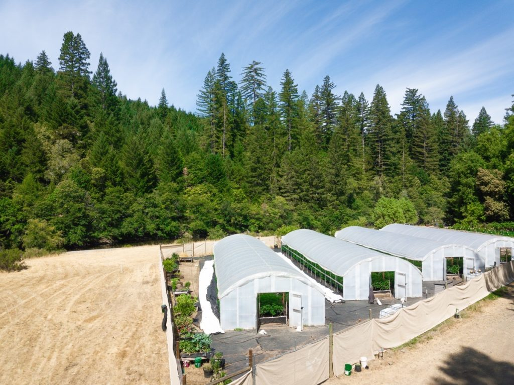 Mattole-Cannabis-Farm-Photo_120