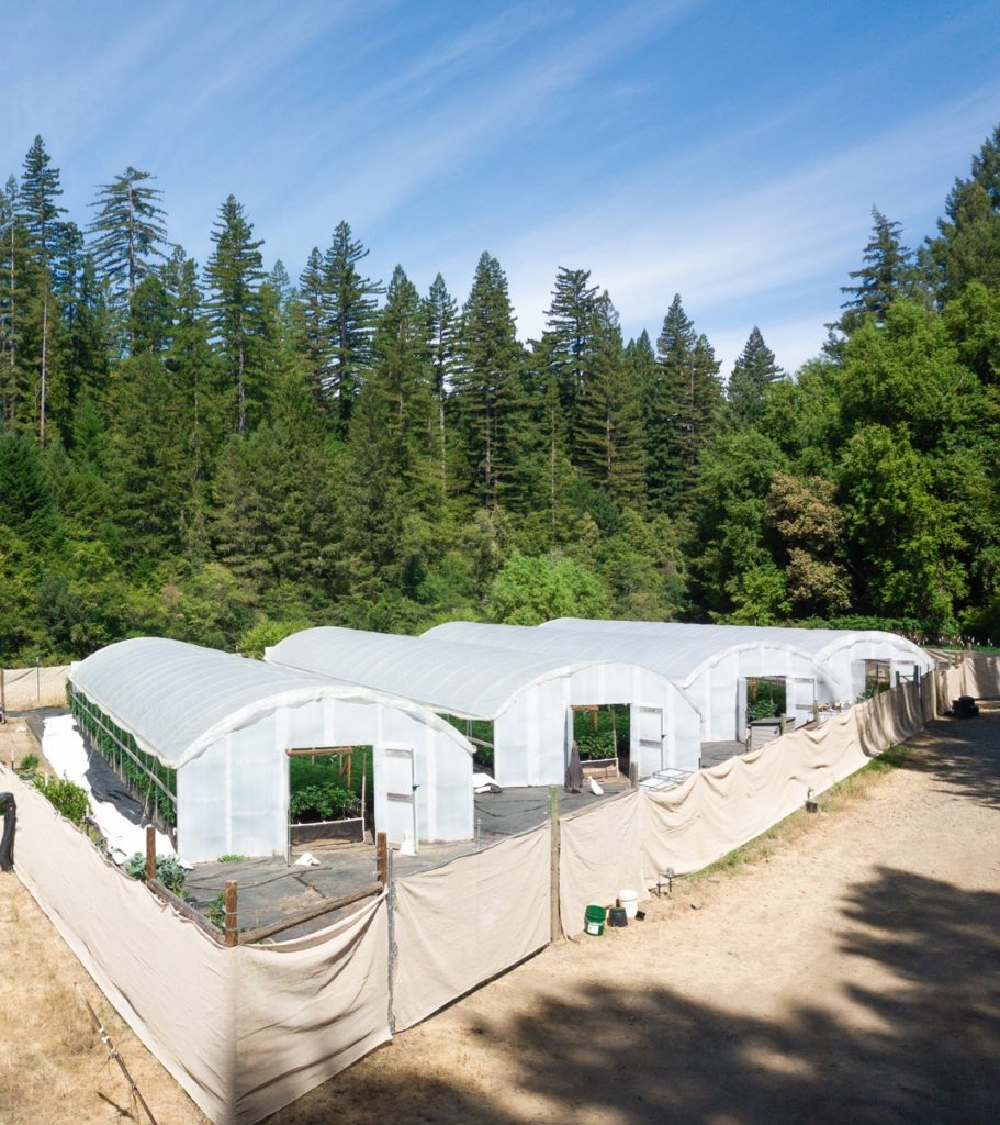 Mattole-Cannabis-Farm-Photo_124