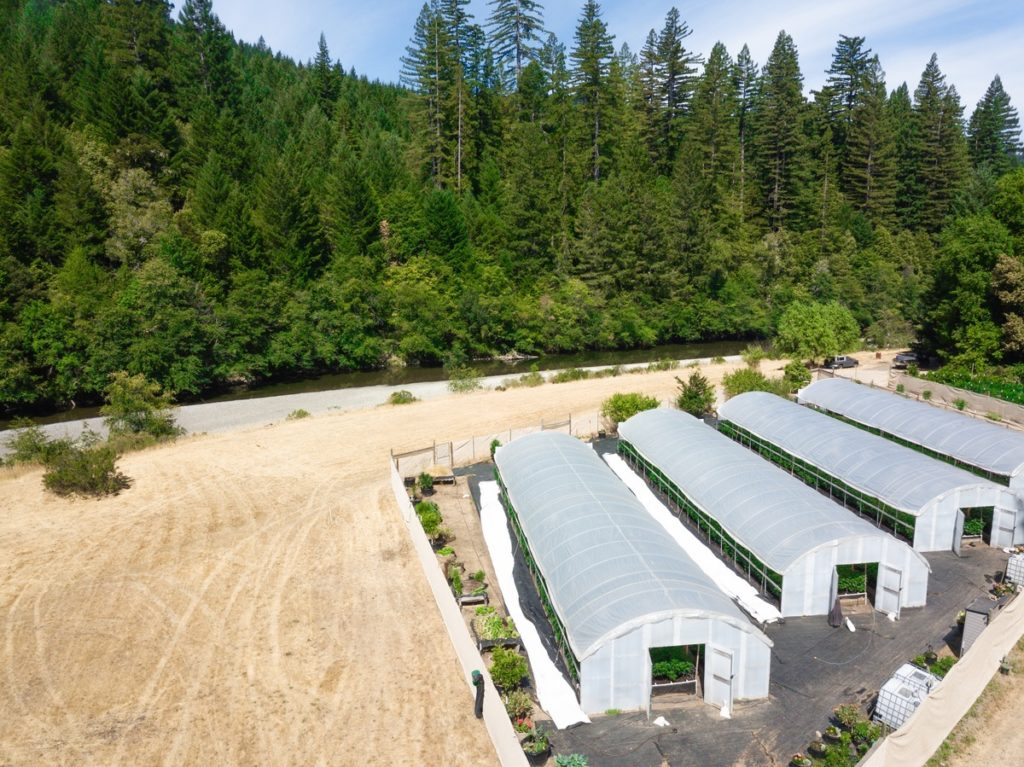 Mattole-Cannabis-Farm-Photo_130