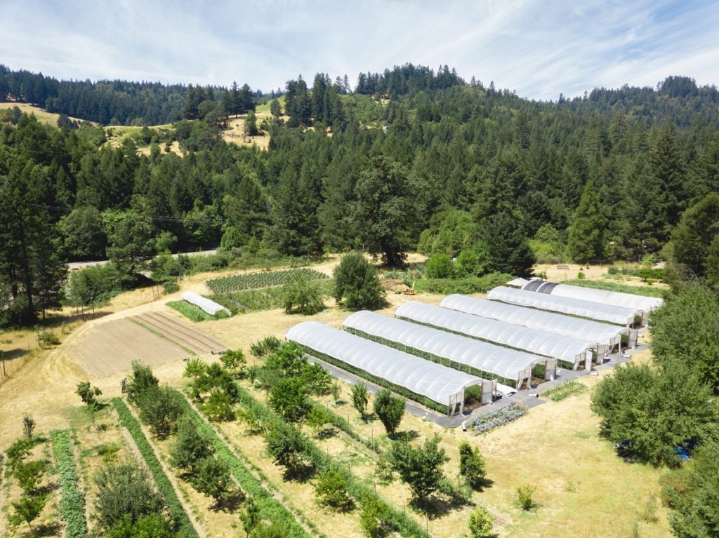 Mattole-Cannabis-Farm-Photo_27