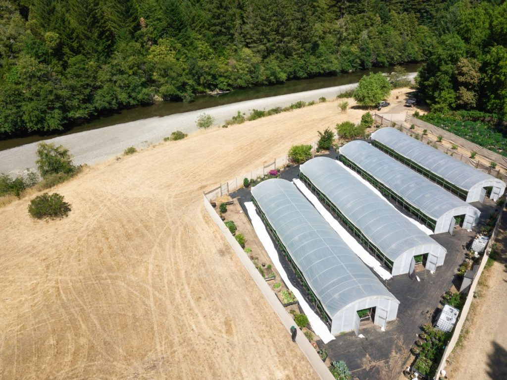 Mattole-Cannabis-Farm-Photo_3
