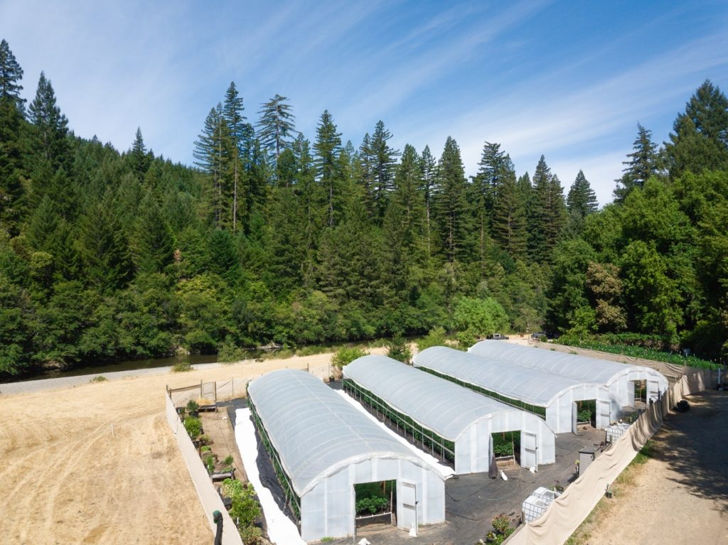 Mattole-Cannabis-Farm-Photo_33