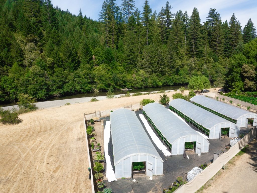 Mattole-Cannabis-Farm-Photo_45